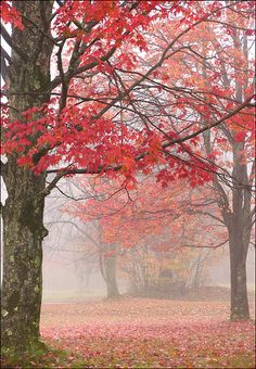 Autumn arches, Red House Lake, Allegany State Park, western NY | Mark K. on flickr