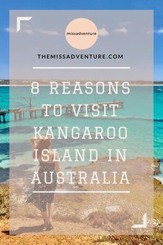 8 Reasons to Visit Kangaroo Island Wine Safari, Wine Tasting Experience, Parent Night, Kangaroo Island, Beach Adventure, Holidays Around The World, Wine Case, Visit Australia, Beach Holiday