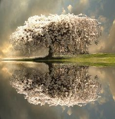 Spring blossoms in Sweden
