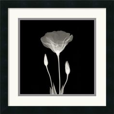 Poppy in Lace Framed Painting Print