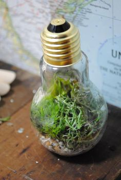 light bulb terrarium. making O2 instead of CO2. maybe I would make it for decoration at a green event