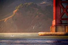 Bridges are made for riding over it, boring. Go #kitesurfing under them like this guy at the Golden Gate #Bridge, #California. #travel