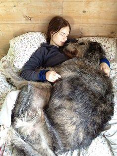 14 cani che sembrano non sapere di essere enormi. Che teneri!