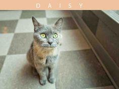 Daisy (A673318)