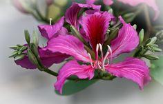flor brasileira - Google Search