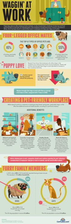 pet infographic design