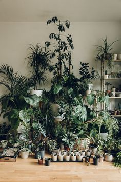 Our latest Haarkon plant family portrait.