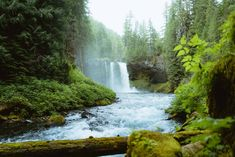Learn about the best Oregon waterfalls, where to find them, and exactly what to expect. Click here to start planning your Oregon road trip! Famous Waterfalls, Oregon Waterfalls, Forest Waterfall, Waterfall Hikes, Ramona Falls, Oregon Road Trip, Oregon Travel, Southern Oregon Coast, Poipu Beach