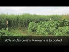 2 Day Tour:  Fresno County Sheriff, Medical Marijuana Eradication.. 2013, turn off the sound and see how much cannabis is grown throughout the land..