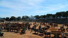 Cavalgada beneficente em prol do Hospital São Vicente de Paula junta centenas de pessoas em Campos Gerais-MG