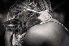 Category: Man's Best Friend, 1st Place — Photographer's Wife Cuddling With Border Collie by Carlos Aliperti from Brazil