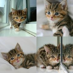 writtenkitten.net - for every 100 words you type, you will be rewarded with an adorable kitten picture. clever motivator internet.