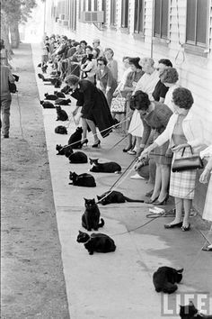 black cat auditions in hollywood | 1961 / black and white photograph, women and cats in line