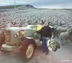 Pastor gallego confiesa que se ha cepillado 8 millones de ovejas y algún estatuto.