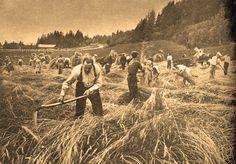 Talkoot, eli sosiaalinen työapu, on suomalaisen talonpoikaisen kulttuurin ikivanha perinne.