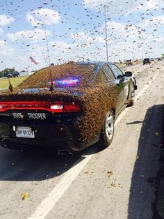 PAULS VALLEY, Okla. - Drivers along a busy interstate may need to take a detour because of an unusual accident. Shortly after 1 p.m., witnesses reported seeing a truckload of honeybees turned over...