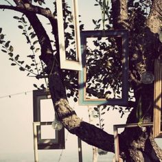 Frames hanged on tree, Country Chic wedding