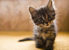 PHOTOS. Avoir un chat rend plus heureux et en meilleure santé, voici pourquoi
