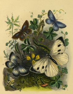Art / Photography & Garden of the Far East Women Be Like, Beautiful Butterflies, Wings, Butterfly, Floral Paintings, Vivarium, Joseph, Favorite Things, Archive