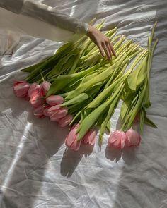 Spring Aesthetic, Flower Aesthetic, Beige Aesthetic, My Flower, Beautiful Flowers, Floral Flowers, Photo Deco, Planting Flowers, Aesthetics