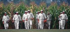 Corn, baseball and dreams