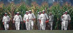 Corn, baseball and dreams