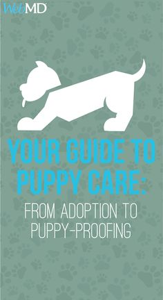 WebMD illustrates puppy care and helps you understand the basics. From feeding and playing to shots and spaying, it's everything you need to know before bringing a puppy home. Cat Insurance, Pet Health Insurance, Puppy Care, Dog Care, Pot Belly Pigs, Cheap Pets, Puppy Play, Puppy Food, Healthy Pets