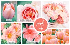 Peach Spring flowers including peach tulip, garden rose, daylily and geranium.