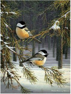 Chickadees-Sam Timm My little Chickadee . Pretty Birds, Beautiful Birds, Animals Beautiful, Black Capped Chickadee, Tier Fotos, Backyard Birds, Bird Pictures, Birds Pics, Little Birds