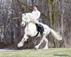 "What a gorgeous horse! ""Mystic Warrior,"" a Friesian/Appaloosa cross ..."