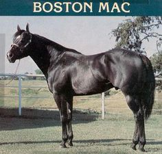 boston mac horse - Google Search