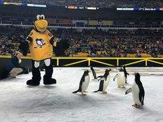 Stadium series penguins!! This is greatest thing to ever happen on ice EVER!!!!!