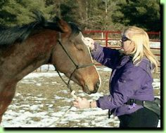 Training Tips - how to relax a horse, build trust, and bond them to you