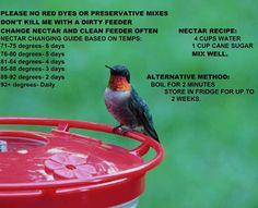 Care of hummingbirds.