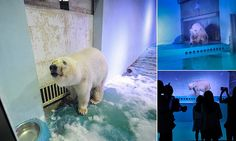 Misery of world's 'saddest' polar bear in Chinese SHOPPING centre  Sign the petition at animalsasia.org.
