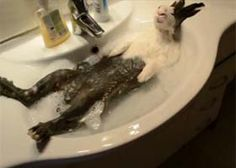 Cloody the bunny taking a bath
