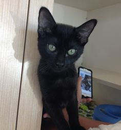 Renegade is a petite, black female kitten who is 3.5 months old. She is very talkative, social with her human and feline friends, and loves to play with toys. Her adoption fee is $60; includes her spay, vaccinations and a health exam. Apply with Another Chance Animal Welfare League Adoption Center at www.acawl.org. Call 547-7387. Go to www.redding.com for more adoptable pets.