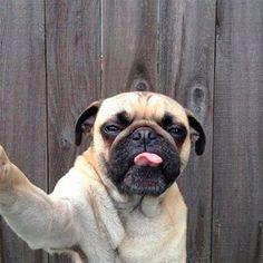 Las selfies más divertidas de perros y gatos