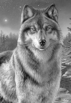 By Number Artist Collection W.Reeves Paint By Number Artist Collection W.Paint By Number Artist Collection W.Reeves Paint By Number Artist Collection W. Beautiful Wolves, Animals Beautiful, Cute Animals, Animal Drawings, Art Drawings, Tier Wolf, Wolf Pictures, Paint By Number Kits, Wolf Spirit