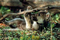 Got the stick mom.