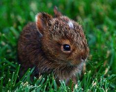 .honey bunny