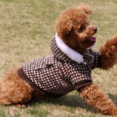 Elegante High-Grade Cheques Padrão capuz Brasão para Animais de estimação Cães (tamanhos variados) – BRL R$ 47,71