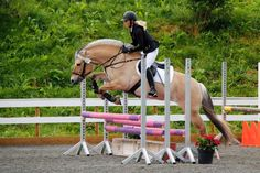 Show Jumping, Beautiful Horses, Animals, Inspiration, Pony, Animais, Animales, Animaux, Equestrian