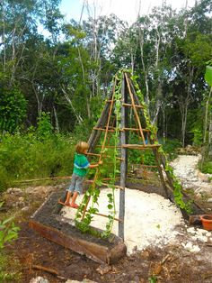 I've always wanted to try this. Grand visions of a lush pea vine, honeysuckle, or jasmine covered teepee for the boys to play for hours in. A children's garden in the making