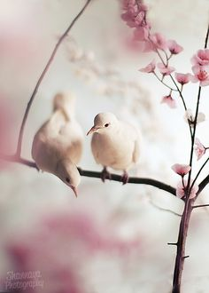 Two turtledoves :)
