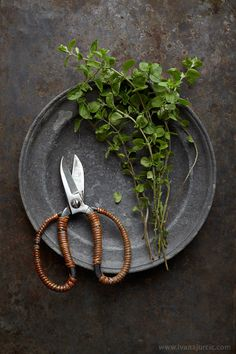 fresh oregano   food photography