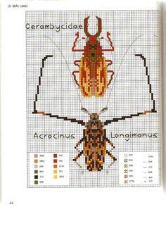 Gallery.ru / Фото #47 - MARABOUT Insects - tatasha