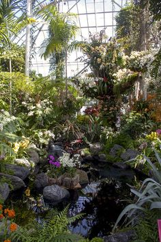 Kaleidoscope of Color.  A dense collection of tropical and native orchids lines a rock-bordered pond, creating an otherworldly experience.