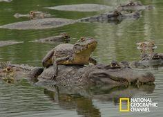Encante-se com as fantásticas criaturas e belas paisagens do Pantanal. Brasil Secreto, Pantanal. #NatGeo Confira conteúdo exclusivo no www.foxplay.com