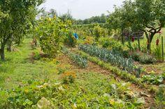 Bestimmte Kräuter soll man nicht nebeneinander pflanzen, um einen gesunden Kräutergarten heranzuziehen. Nur so kann man sich auch an der Ernte freuen.